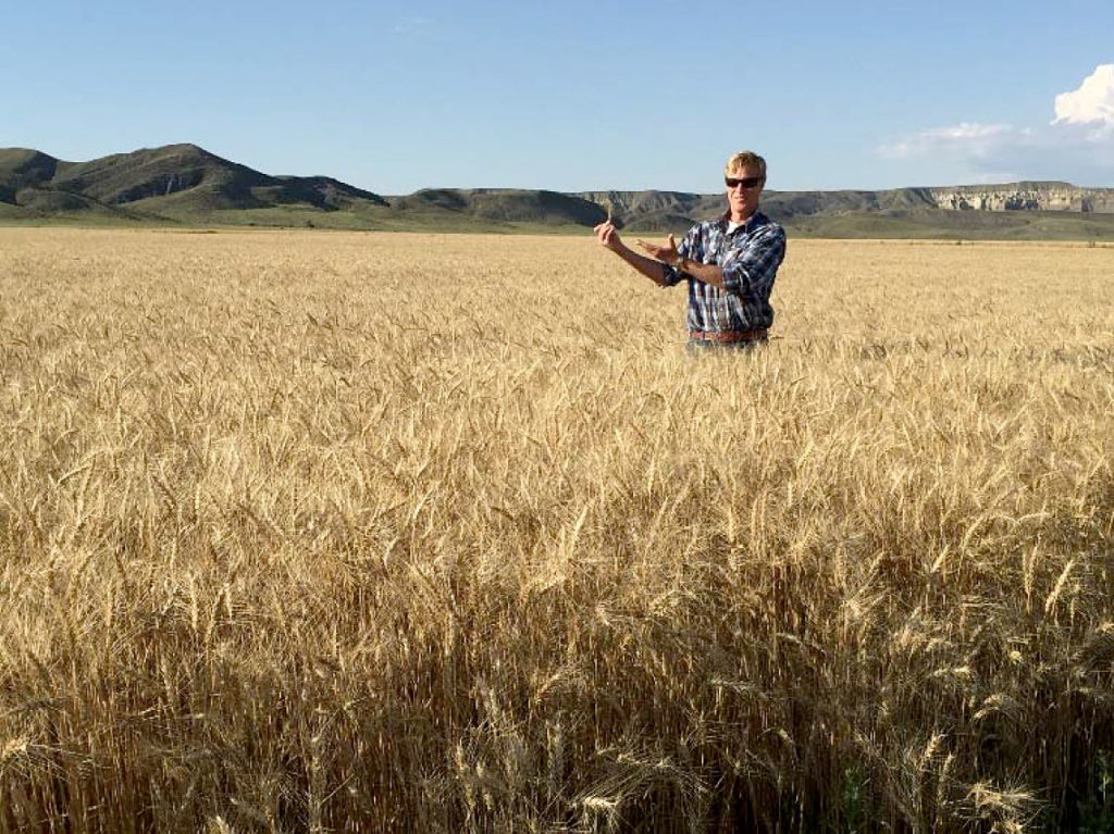 Montana Carbon Project wheat field